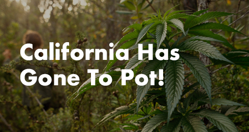 California Has Gone To Pot!